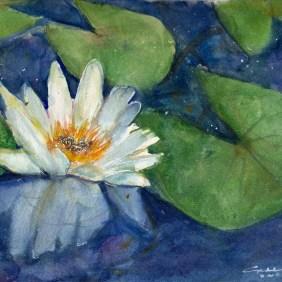 Lily Colored Pencil