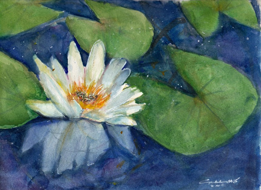 Lotus and Lilypads 2015
