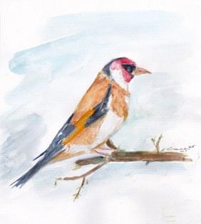 sleepy sparrow, 2015
