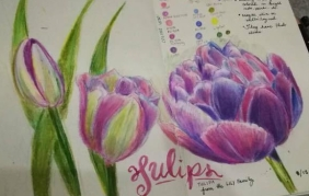 tulip study colored pencil
