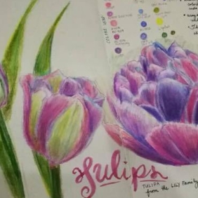 tulip study colored pencil