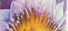 Closeup of a Flower. Colored Pencil 2015